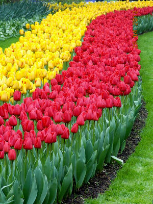 India Travelogue Enchanting Keukenhof And The Fables Tulips Of Holland