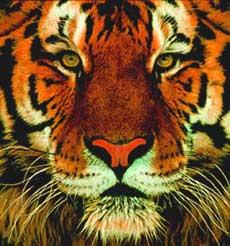 La tigre del Bengala